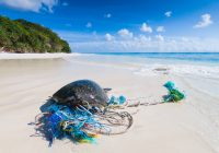A turtle caught in a ghost fishing net on a beach