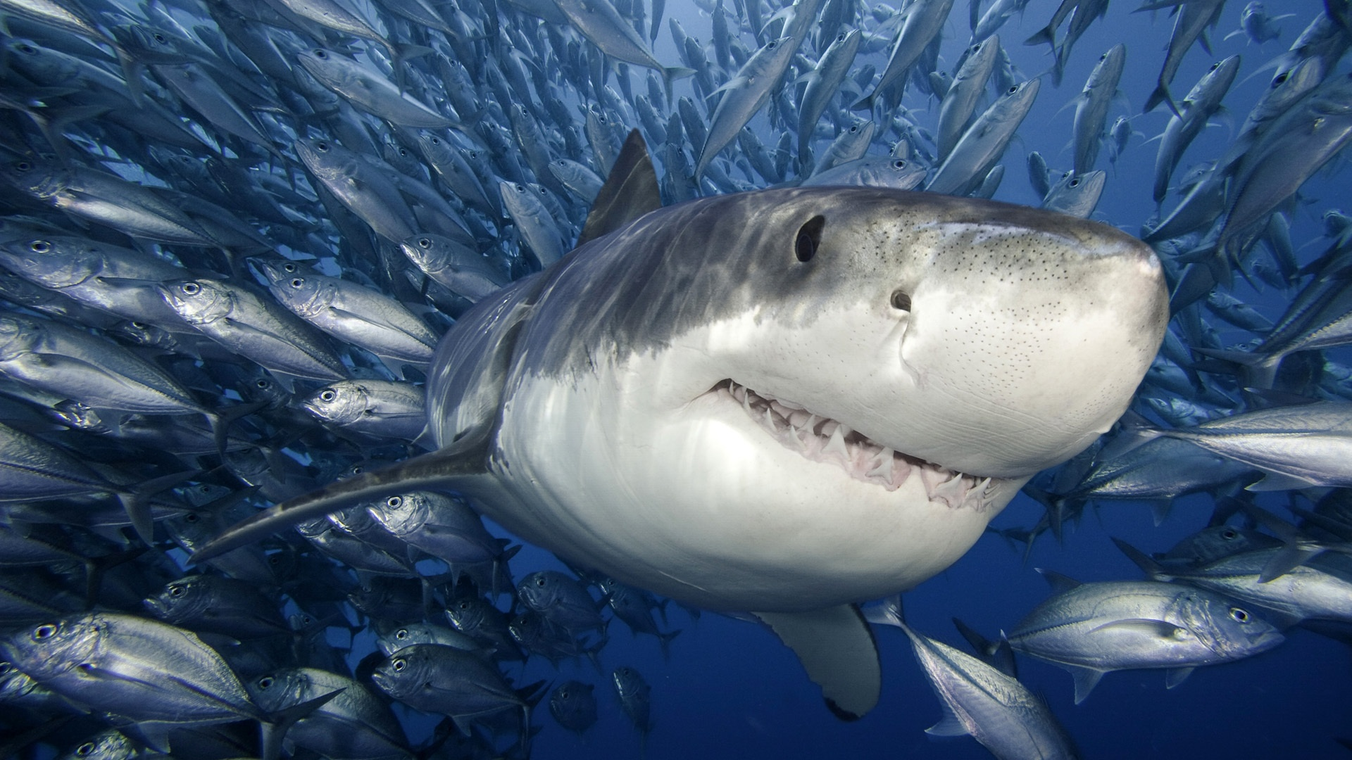 6 shocking shark facts you never knew for Baby shark fish