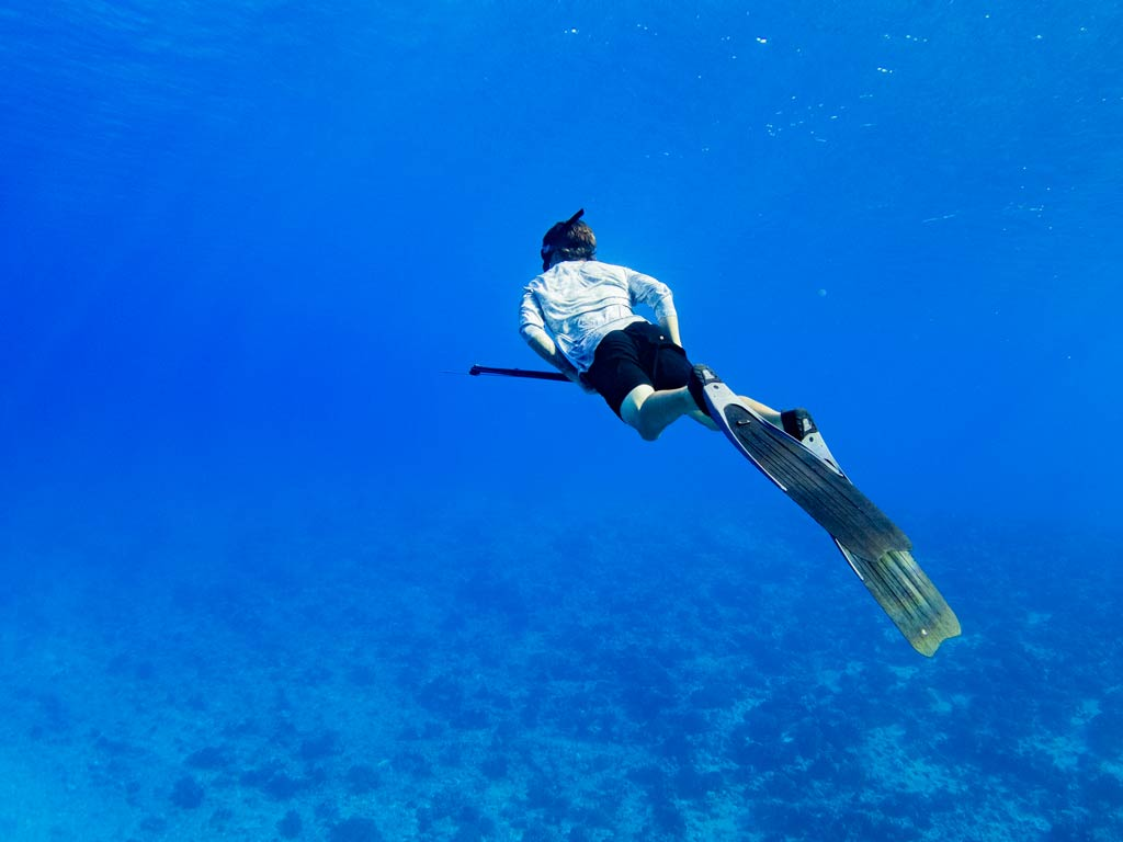 A spearfisher swims in blue waters, looking for fish