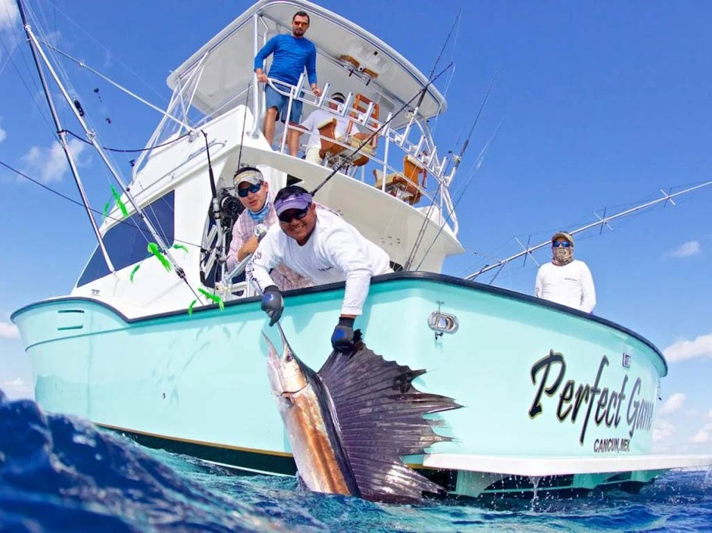 Anglers pulling a Sailfish out of the water