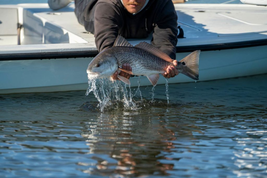 An angler aboard a charter boat holding a Redfish caught on a fly.