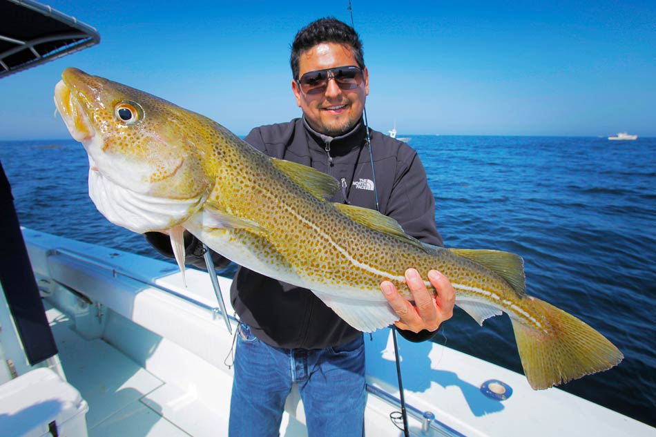 A smiling man in sunglasses holding a big Cod fish while standing on a boat
