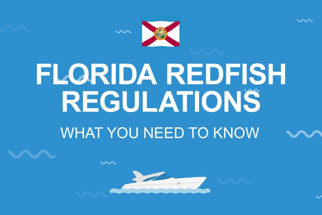 """An infographic with the text """"Florida Redfish Regulations"""" on a blue background."""