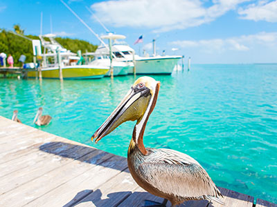 Fishing in Islamorada FL