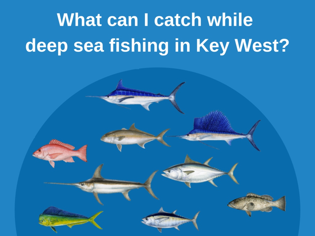 An infographic showing the top fish species to catch on a deep sea fishing trip in Key West, including Marlin, Sailfish, Swordfish, Tuna, Snapper, and Grouper