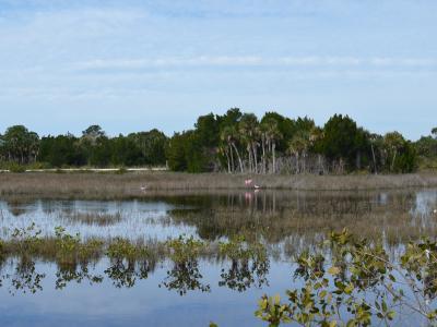 Fishing in Mosquito Lagoon FL