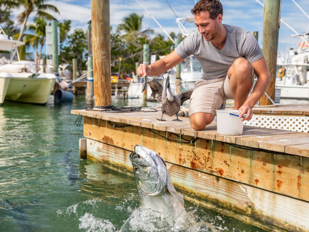 A man feeding a Tarpon in the Florida Keys that's jumping out of the water