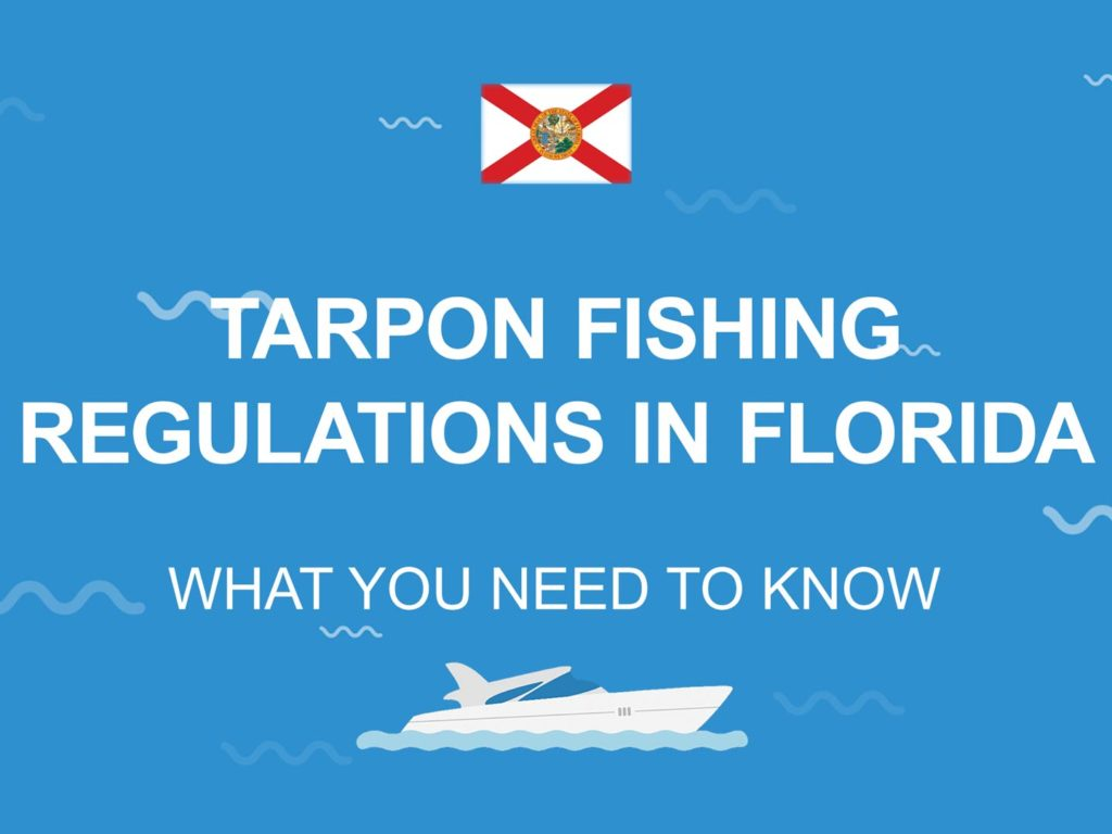 """An infographic with the Florida flag and the text: """"Tarpon fishing regulations in Florida"""""""