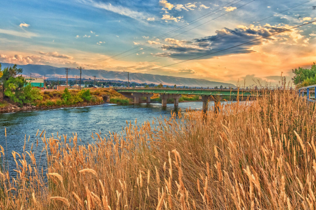a look at wheat next to the North Platte River near Casper, Wyoming