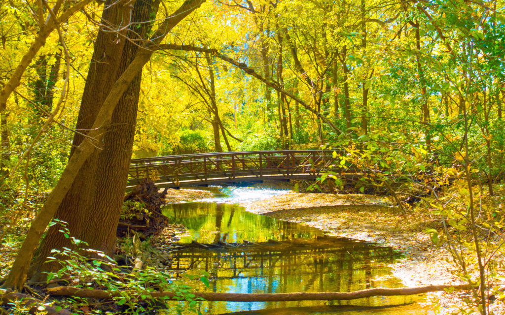 a wooden bridge and a stream in one of the forests in Hamilton County, Indiana