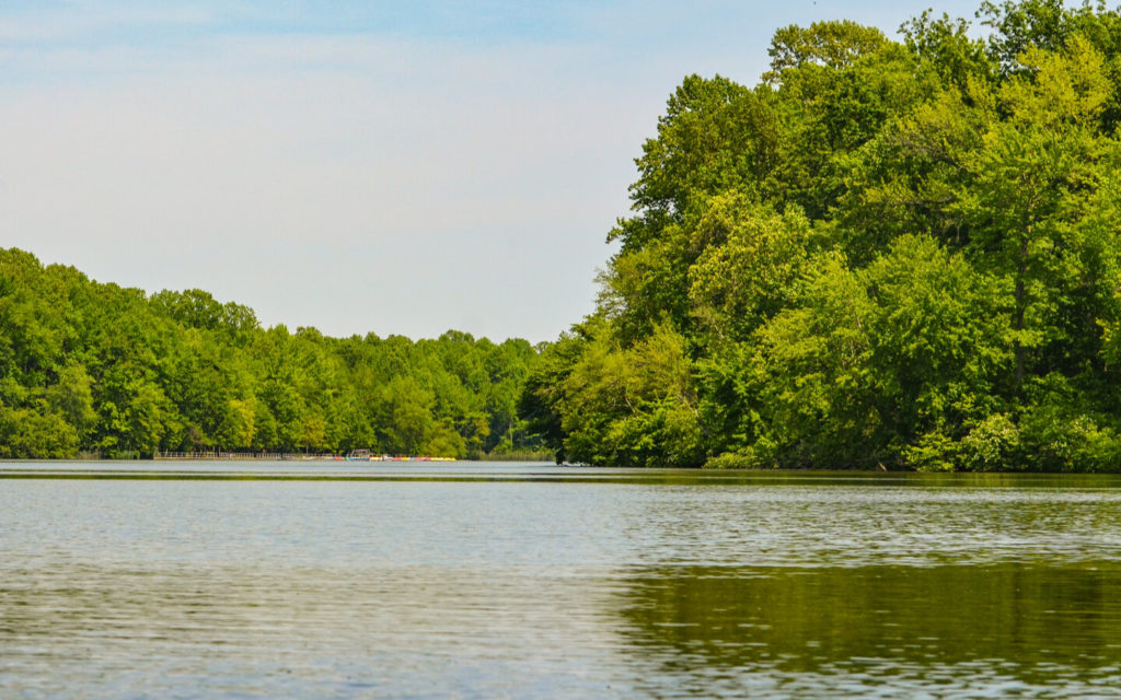 a view of Lums Pond in Delaware