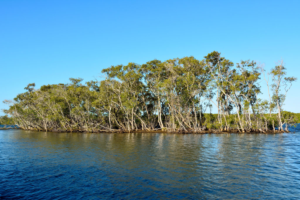 Mangroves framing the island close to the Jumpinpin in Gold Coast