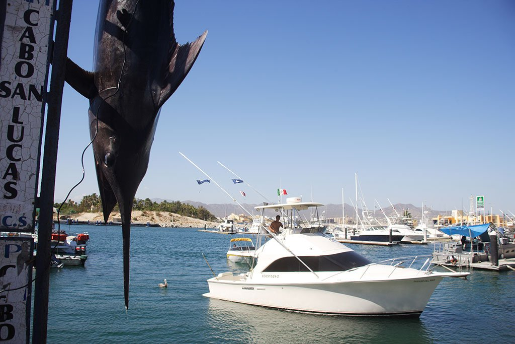 A Marlin hangs next to a sign stating Cabo San Lucas while an offshore fishing boat returns to shore