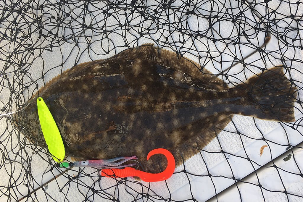 A Flounder in a net with soft plastic and spoon lures hanging out of its mouth