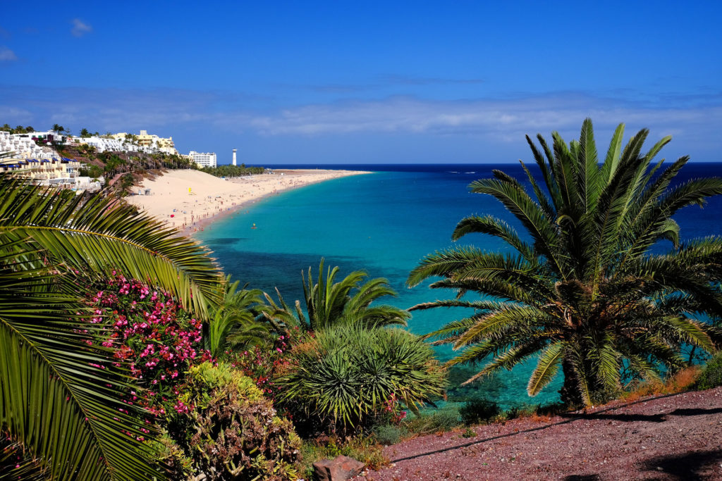 A beach in Fuerteventura with tropical plants and palm trees in the foreground and the coastline in the back.