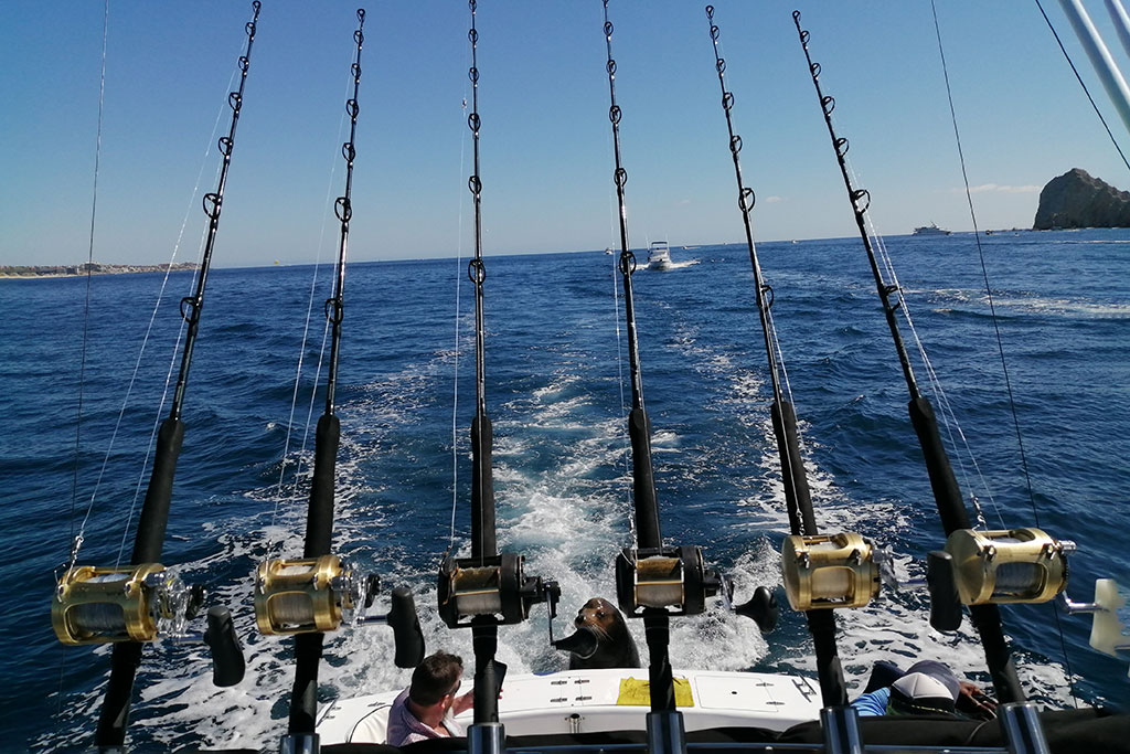 Six lines troll behind a fishing charter in Cabo San Lucas
