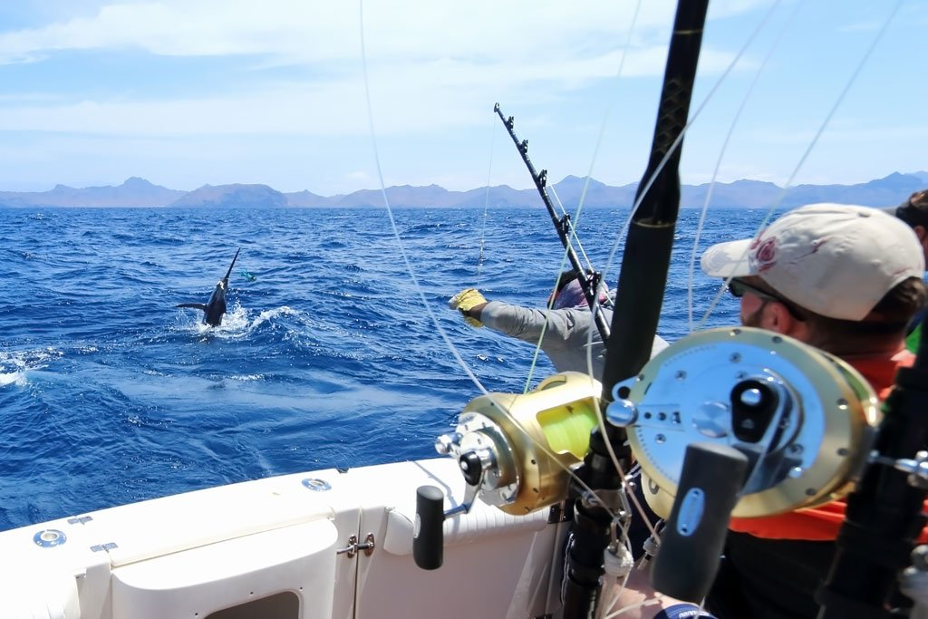 An angler battles a Marlin than can be seen emerging from deep blue waters with fishing rods and reels in the foreground