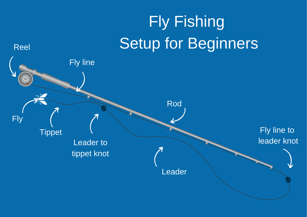 An infographic showing a generic fly fishing gear setup with the rod, fly line, reel, leader, tippet, and fly