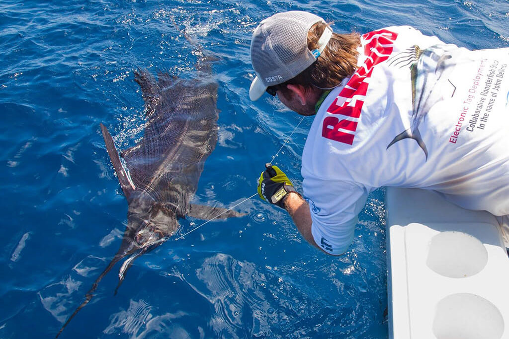 A man pulling a hooked Sailfish towards the boat so that he can safely release it
