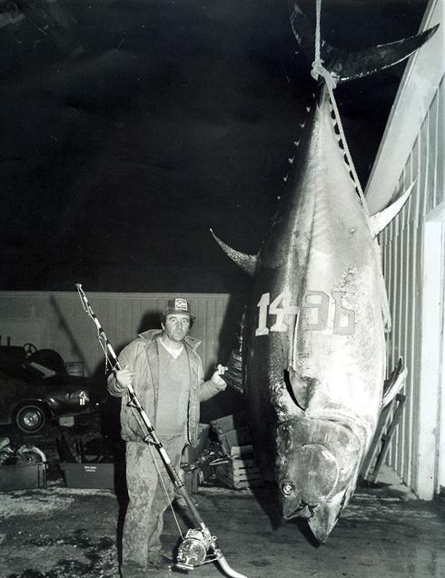 a 1496 lb IGFA World Record Atlantic Bluefin Tuna