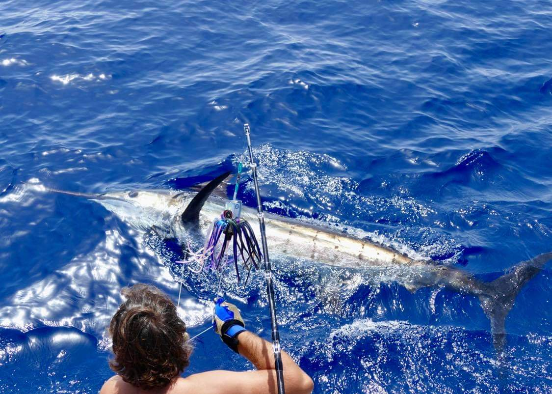 500 lb Blue Marlin in clear blue waters with an angler keeping the fish on the fishing line