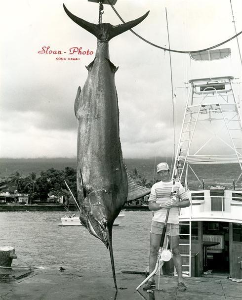 a 1376 lb IGFA World Record Pacific Blue Marlin