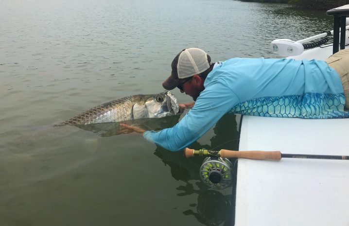 An angler in a blue shirt and a cap with a fly fishing rod next to him. The angler is leaning over the side of a boat to release a Tarpon