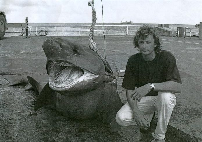 a 1298 lb IGFA World Record  Sixgilled Shark