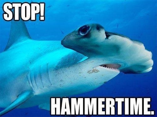 Shark facts: Sharks are really into metal, man