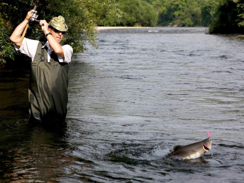 An angler fishing for Pink Salmon
