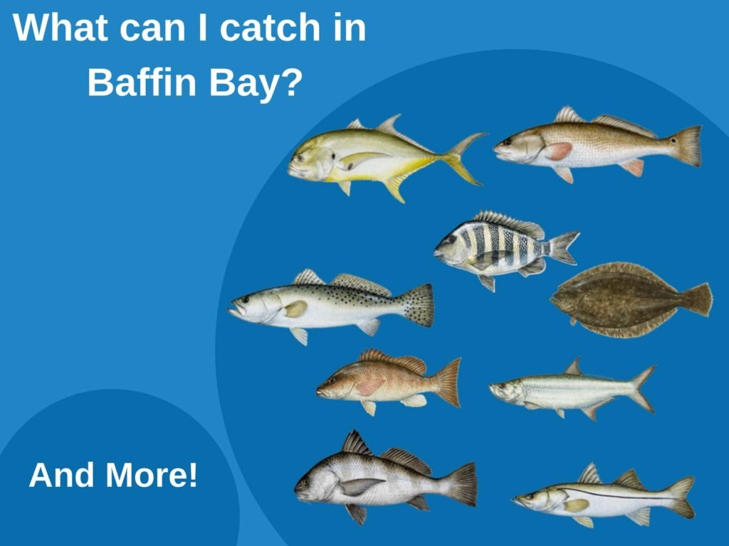 An infographic showing the top fish species to target in Baffin Bay, including Redfish, Speckled Trout, Flounder, Black Drum, Snook, Tarpon, Jack Crevalle, and Sheepshead