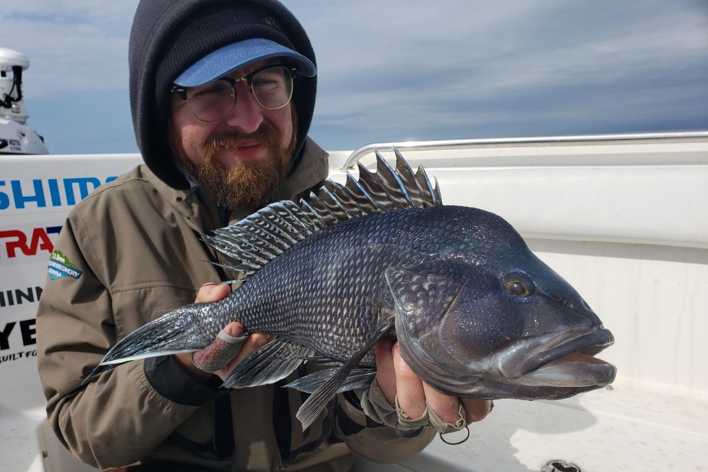 A fisherman holding a Black Seabass in a charter boat