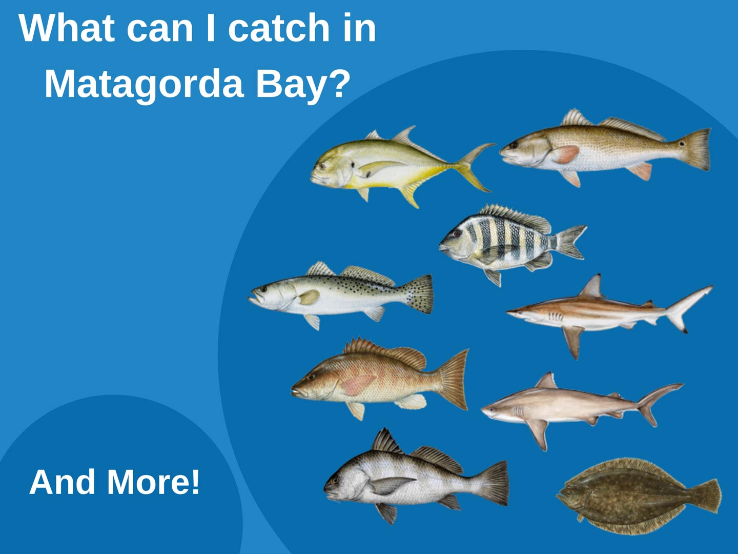 An infographic showing the top fish species to catch in Matagorda Bay, including Sheepshead, Redfish, Black Drum, Speckled Trout, and Flounder