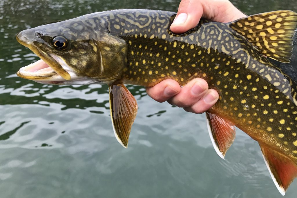 A close-up of a Brook Trout held above water