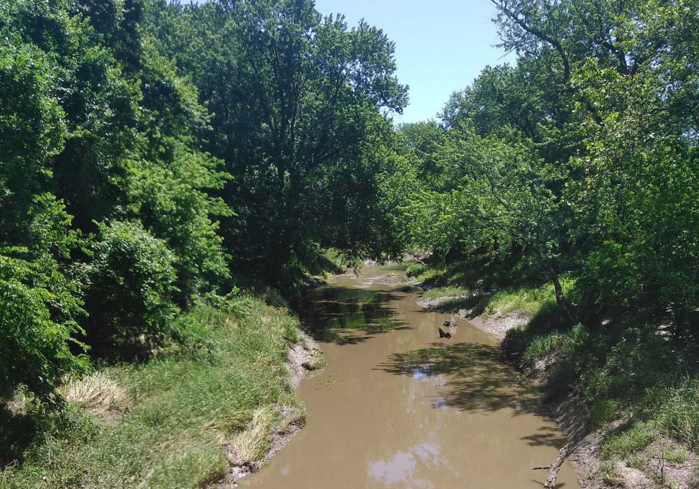 A narrow creek of brown water with trees on either size and a small patch of blue sky at the top.