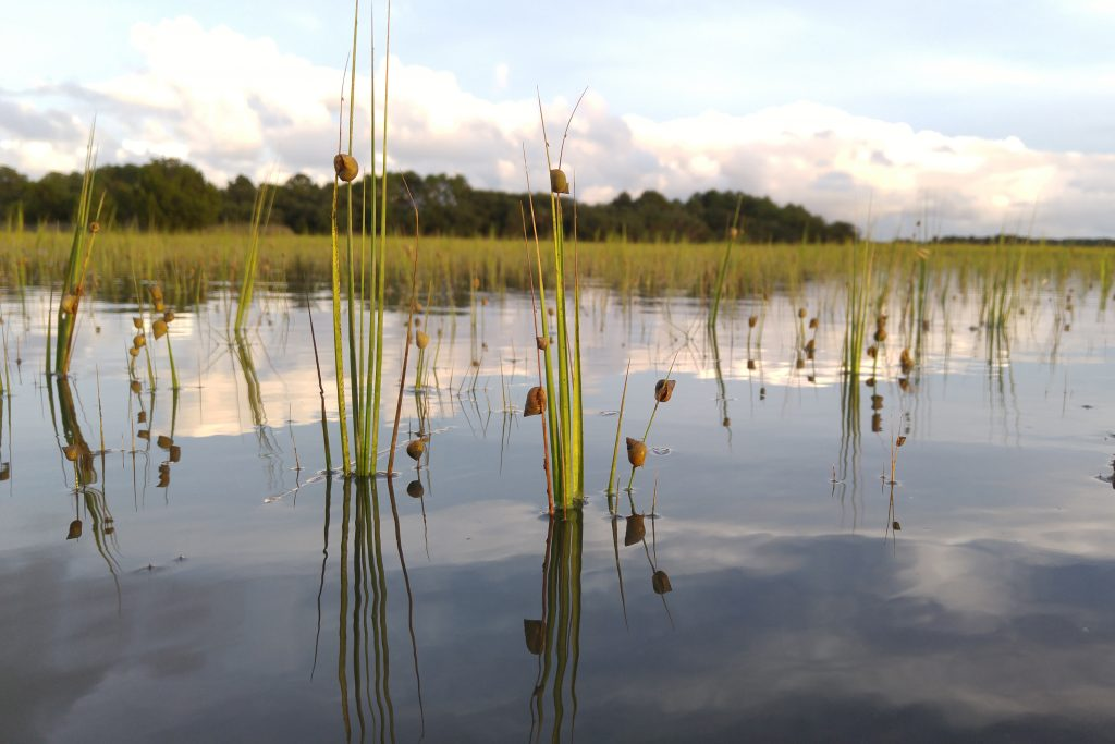 A view across the water of the sea grass marshes of the South Carolina Lowcountry