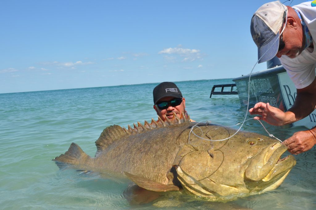 An angler holding a large Goliath Grouper in shallow water while man on a boat removes the hook from its mouth