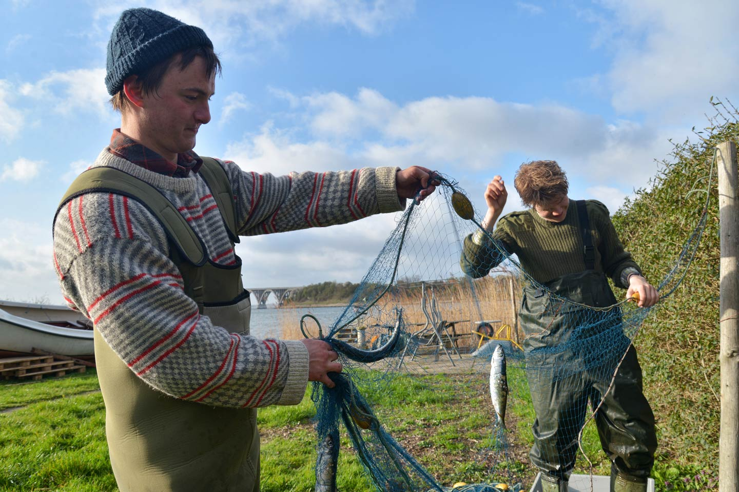 A pair of male anglers removing Herring caught whilst fishing with a net in Denmark.
