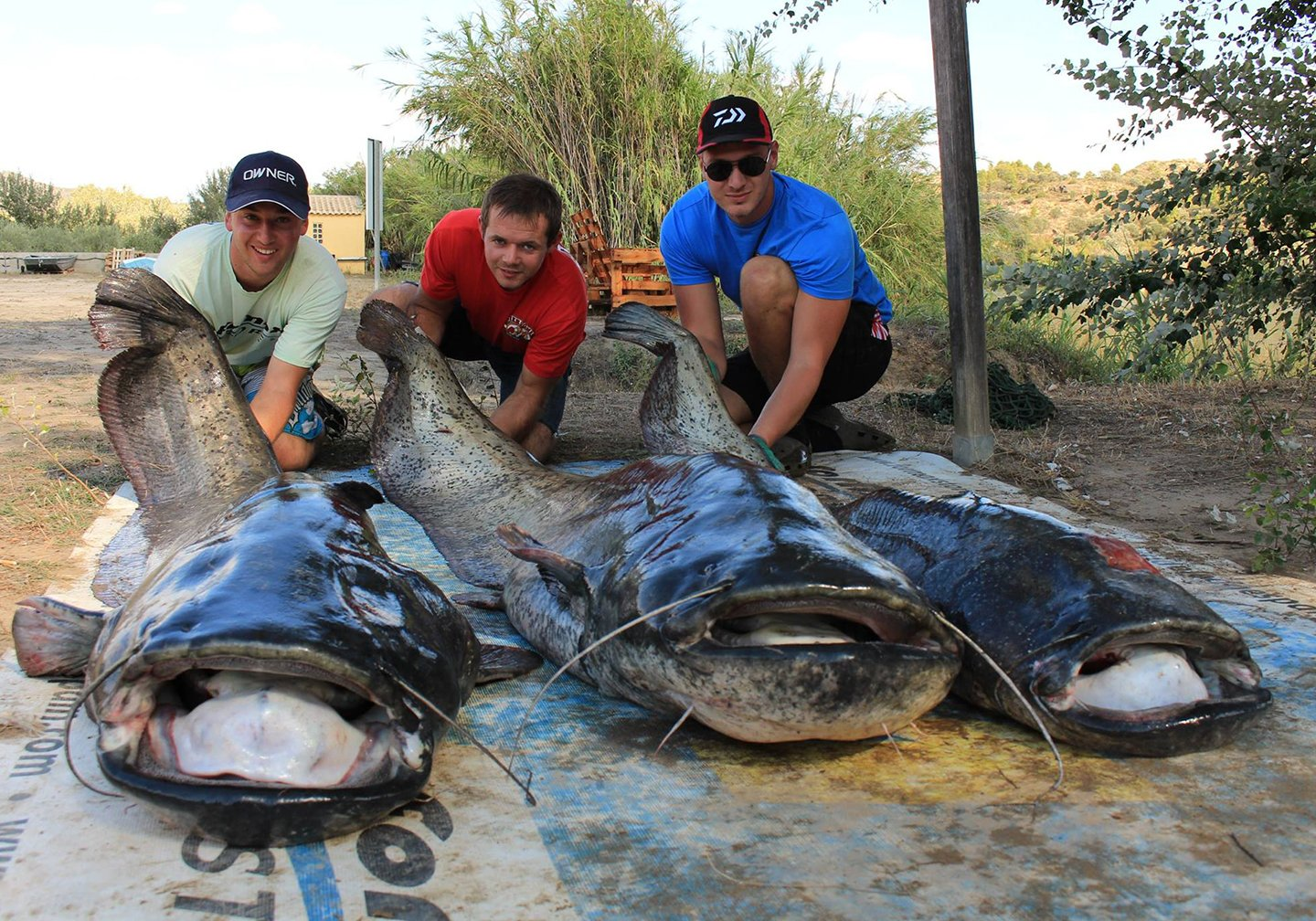 Three anglers posing with giant Wels Catfish, a frequent target on bucket list fishing trips.