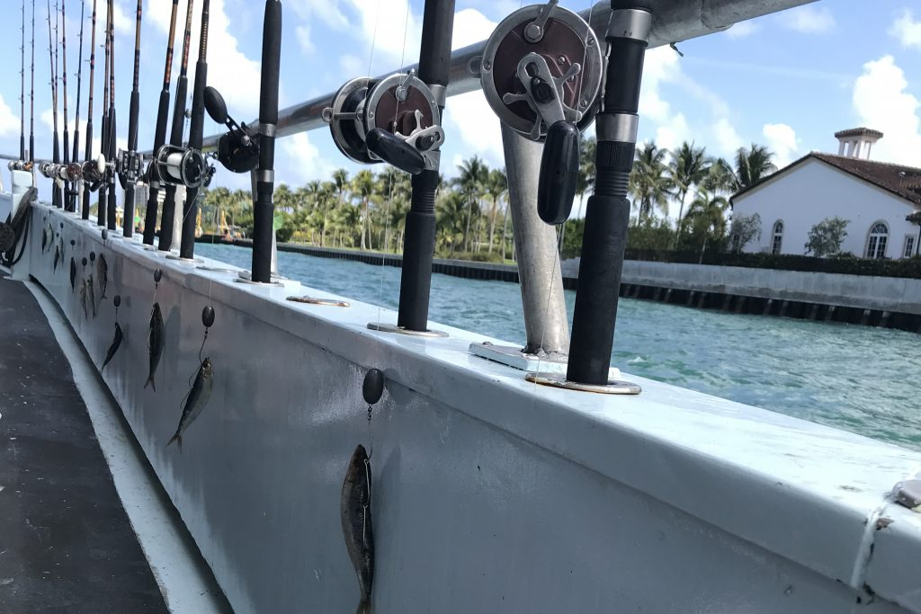 A line of fishing rods set up on the side of a charter boat, with whole fish baited onto the hooks