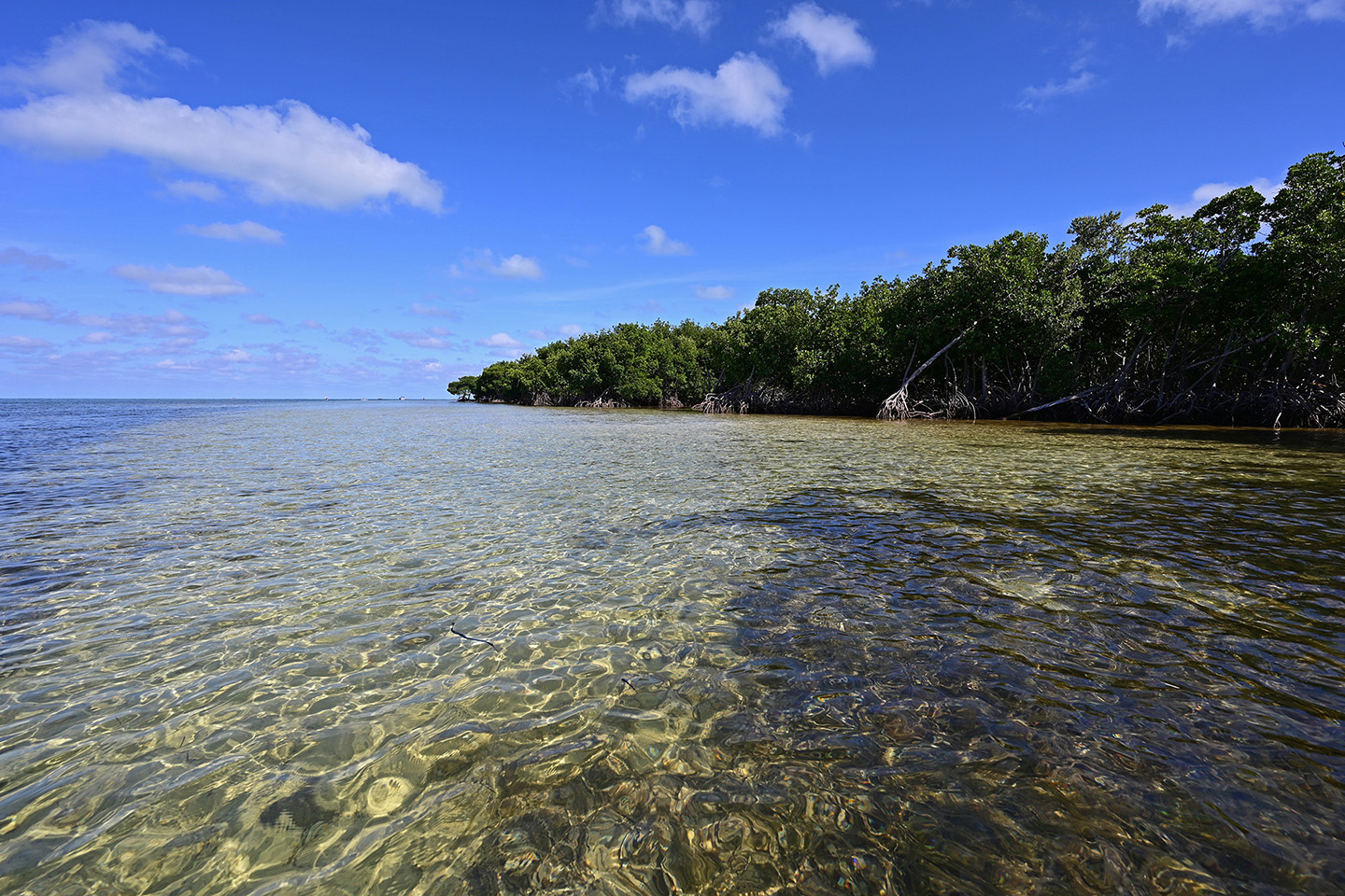 Clear, shallow water with mangroves in the distance