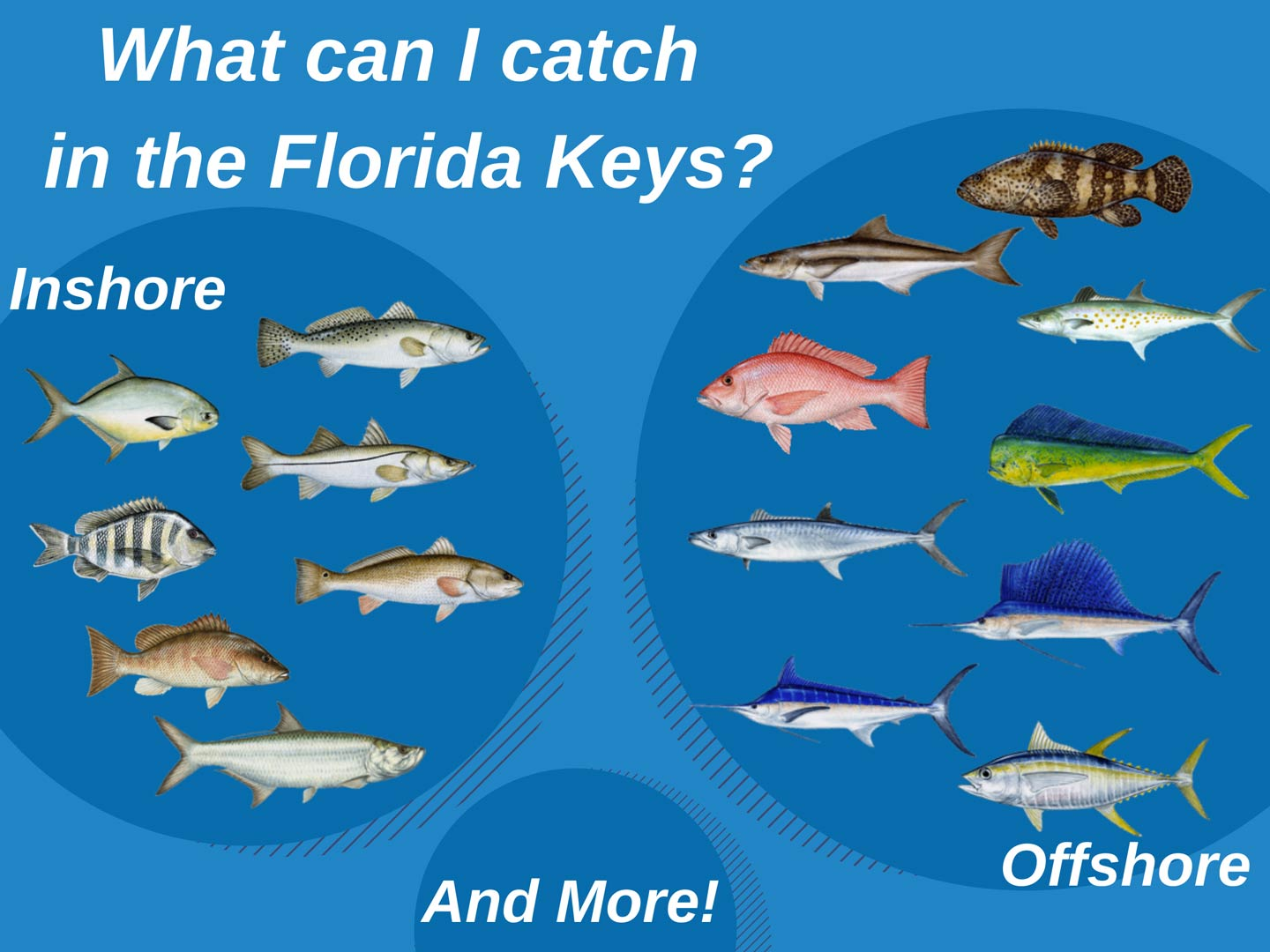 An infographic showing the top fish species to target in the Florida Keys both inshore and offshore
