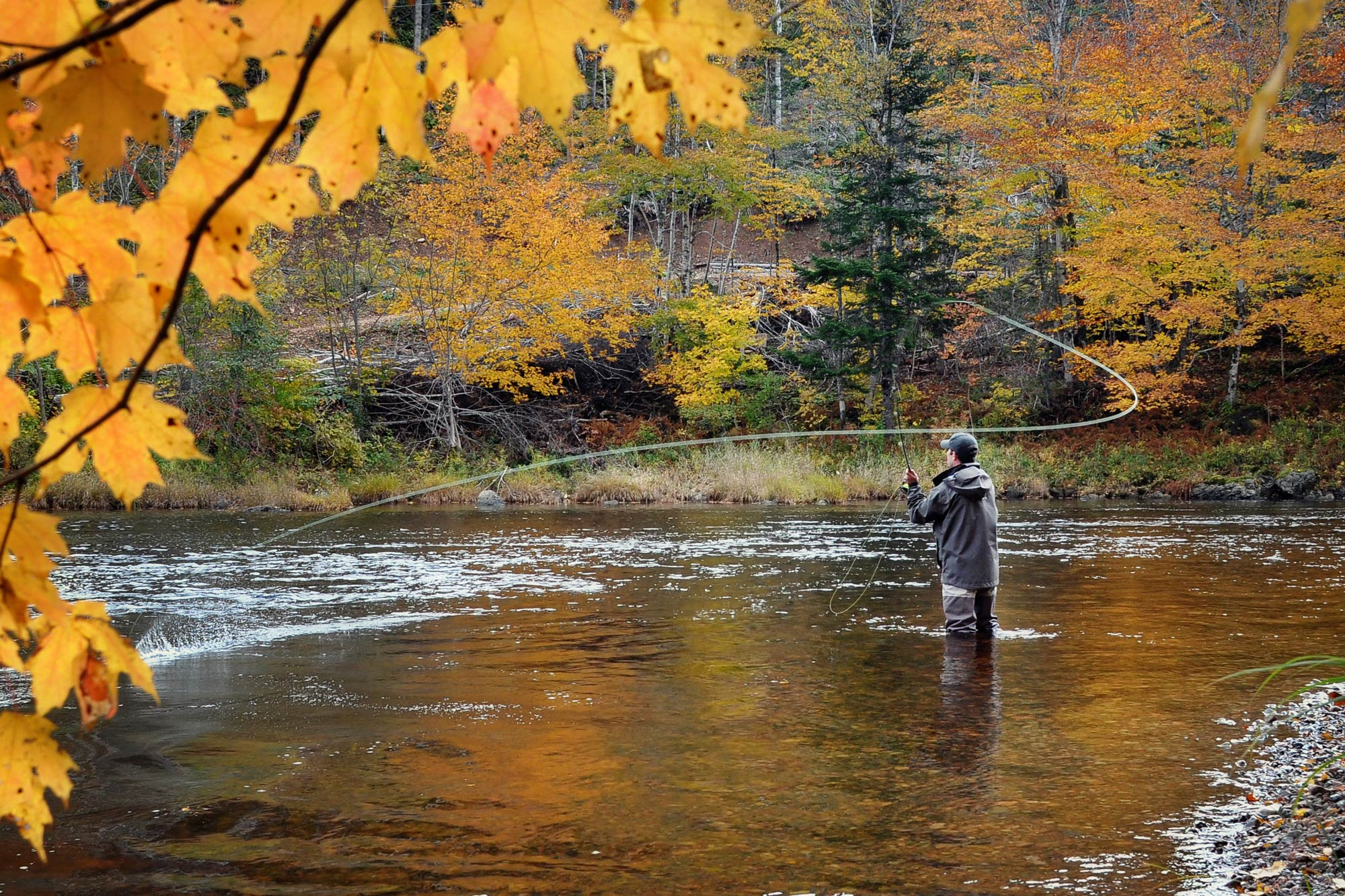A fly fisherman standing in the river mid-cast, surrounded by autumn foliage