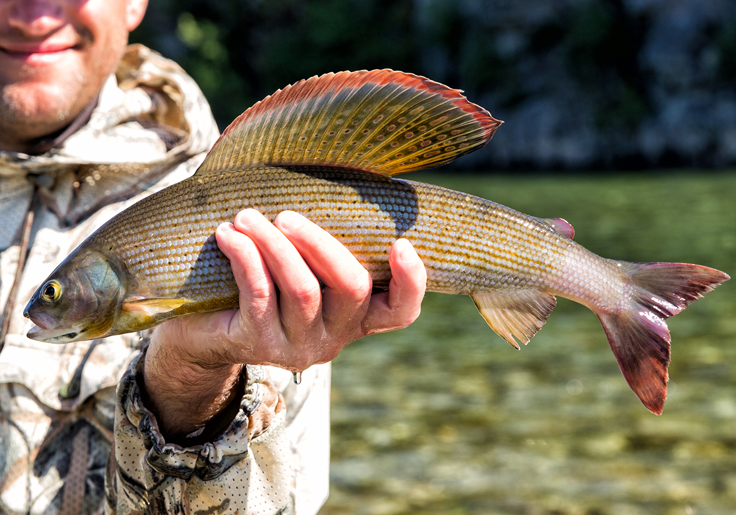 An angler holding a Grayling fish above a river.