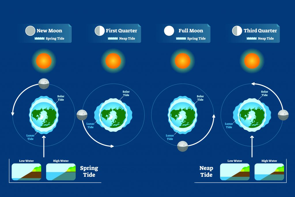 An infographic explaining how tides work. it shows how the position of the sun and the moon around the earth affects the oceans, especially at new moon and full moon