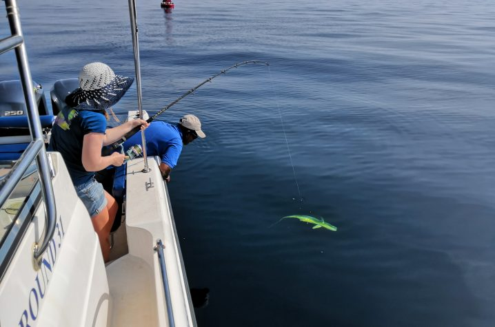A woman on a boat reeling in a Mahi Mahi fish while a man leans over the side of the boat