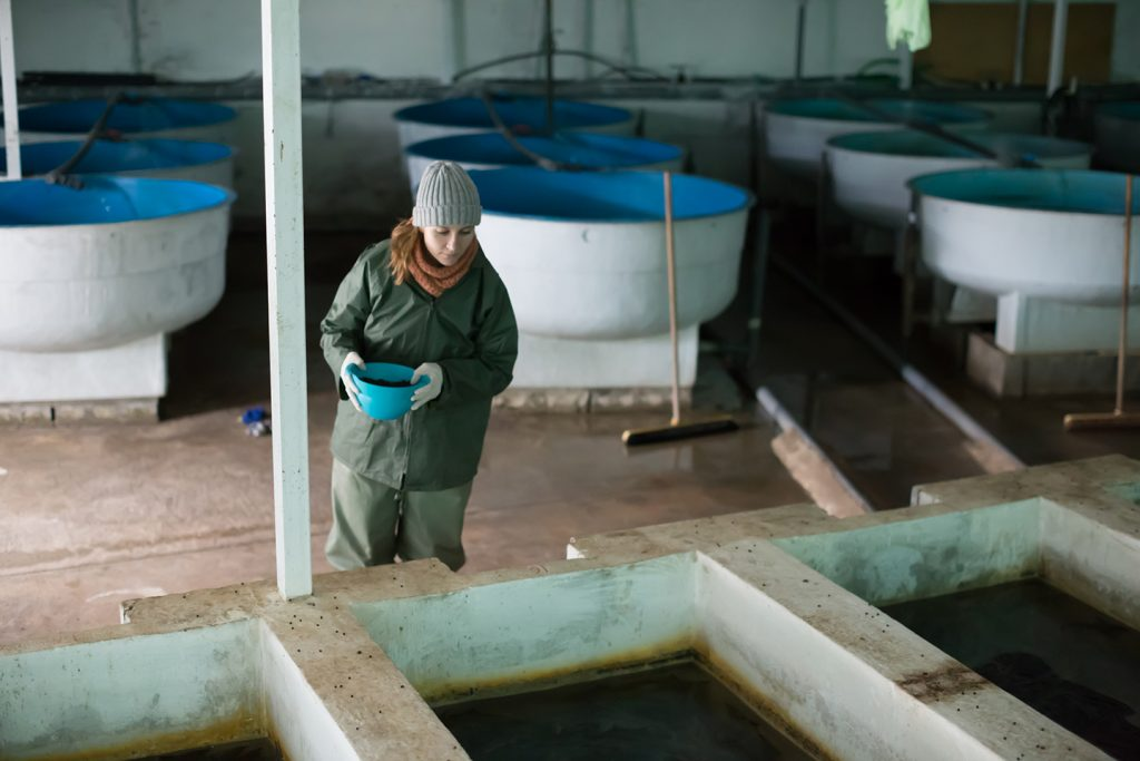 A woman in a green jacket and grey hat holding a blue bowl while inspecting tanks in an indoor recirculating fish farm.