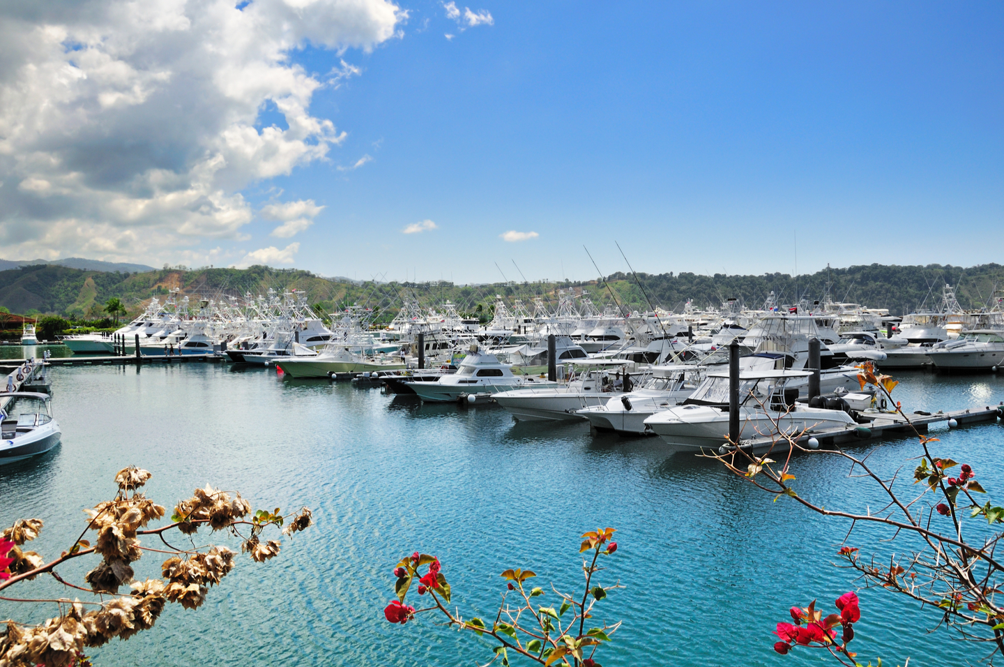 the boats at Los Suenos Marina in Jaco