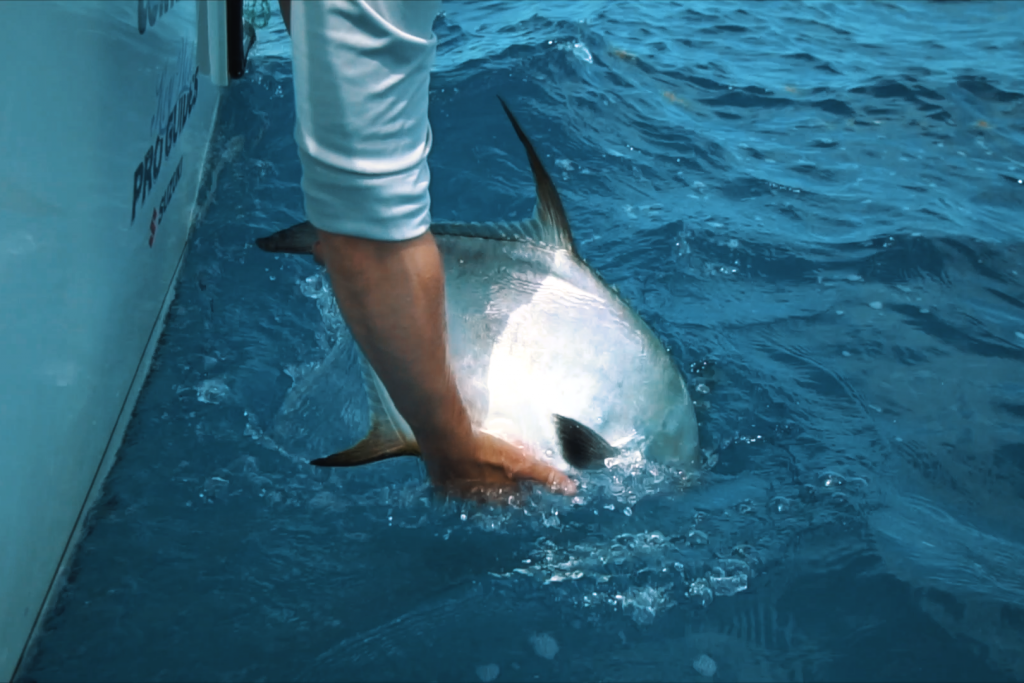 An angler releasing a Permit fish into the water from a boat