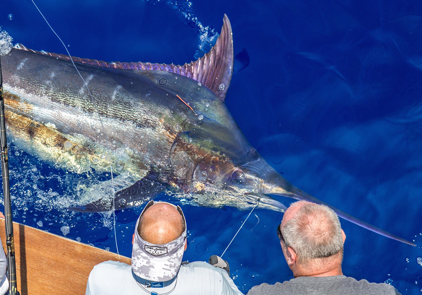 Two anglers looking at a huge Blue Marlin in the water next to their boat.